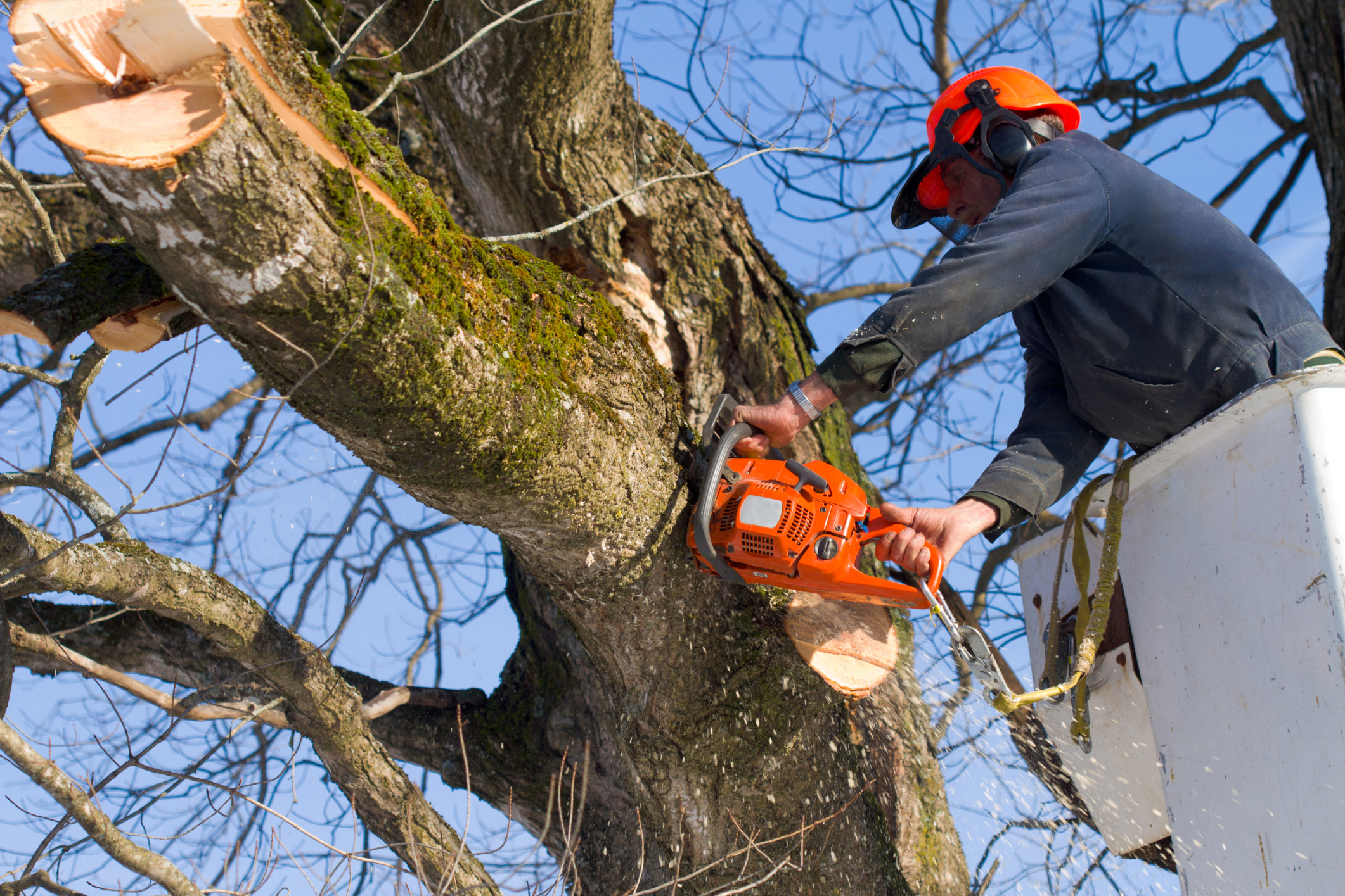 Man using a chainsaw to cut down a large tree limb.