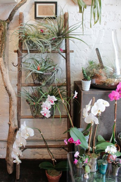 Wooden ladder holding up various plants.