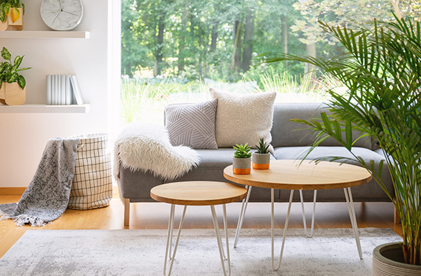 Living room area with modern couch, tables, and greenery.