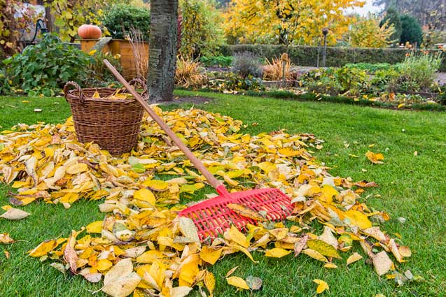 Pile of leaves in a backyard during fall