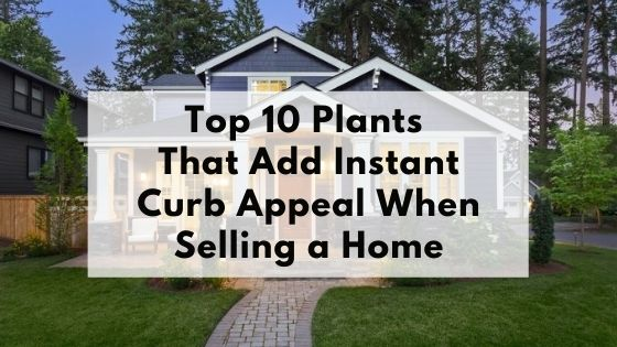 Top 10 Plants That Add Instant Curb Appeal When Selling a home